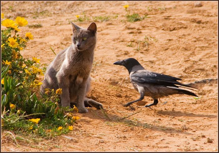 вороны и кошки картинки вспоминает, как