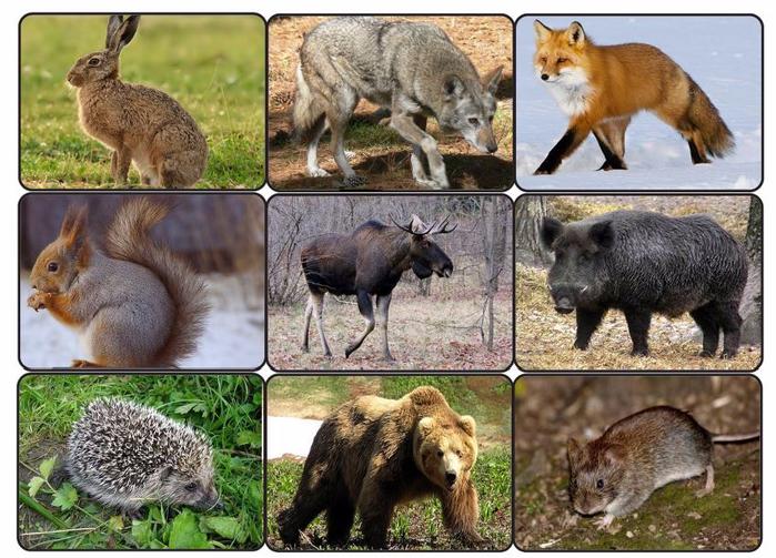 Картинки пособия животных белоруссии