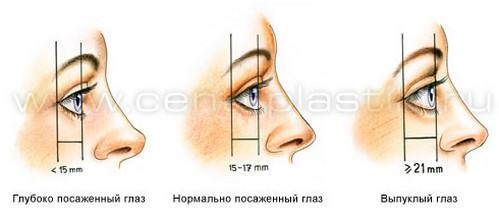 3720816_Anatomiya_verhnih_i_nijnih_vek14 (499x220, 16Kb)