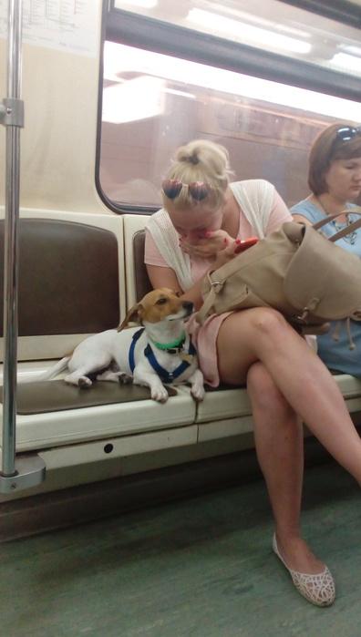 metro-skritaya-kamera-devushki-porno-foto-grudastoy-kitayanki