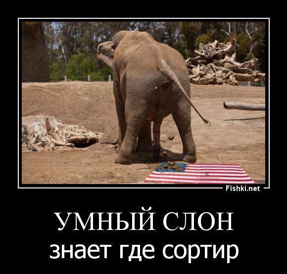 Добрым утром, смешные картинки с надписями про америку и россию
