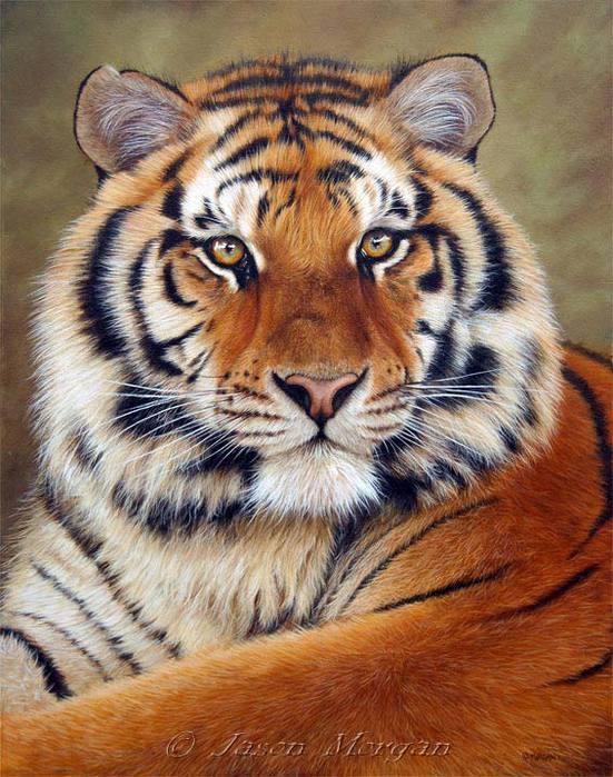 Защита животных тигр диалог на английском языке с переводом 5 класс