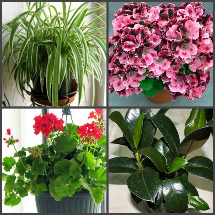 Цветы которые должны быть в каждом доме фото и названия