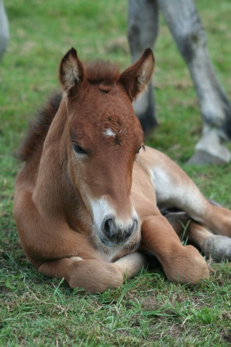 blissfully-cute-baby-animals-baby-horse-16 (466x700, 84Kb)