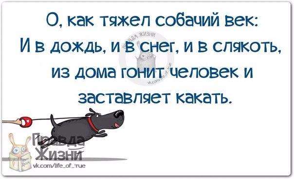 1420659777_frazki-5 (604x367, 150Kb)