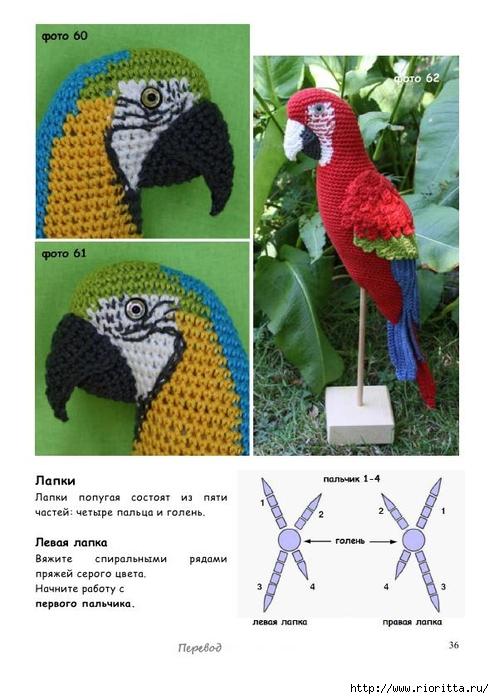 Попугай ара крючком описание