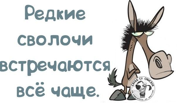 5672049_1391023508_frazochki2 (604x352, 37Kb)