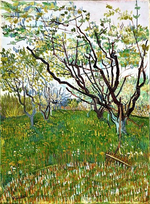 Винсент Ван Гог    Фруктовый сад в цвету   1888 (517x700, 235Kb)