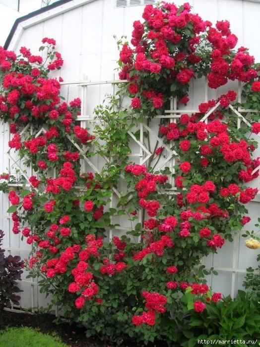 Вертикальные сады (14) (524x700, 356Kb)