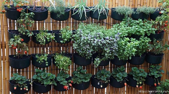 Вертикальные сады (40) (700x388, 338Kb)