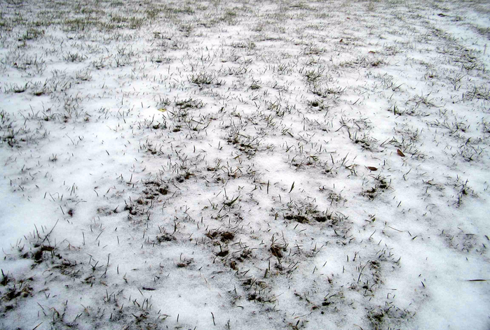 snow_covered_grass_01 (700x472, 385Kb)