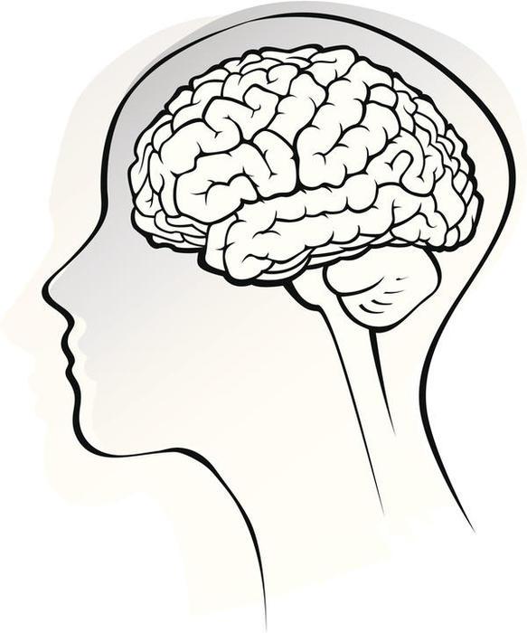 мозг картинки рисунки мнение
