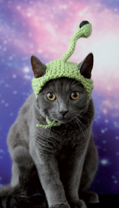 Cats_In_Hats_04 (403x700, 254Kb)