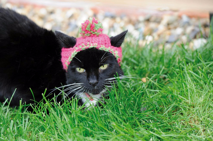 Cats_In_Hats_10 (700x465, 415Kb)