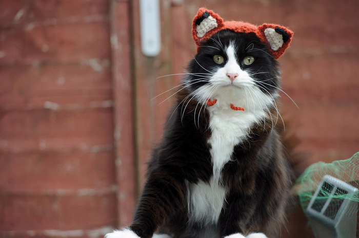 Cats_In_Hats_01 (700x465, 270Kb)