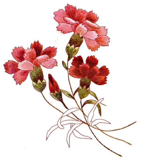 Carnations_Color (600x672, 41Kb)