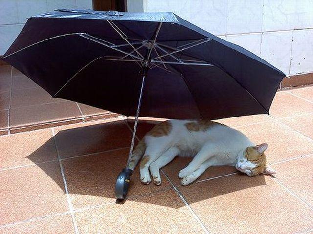 Картинки по запросу Во время жары животные пытаются спастись от солнца и найти прохладное место