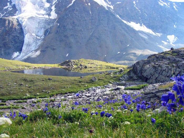 Долина цветов уникальный уголок индии фото