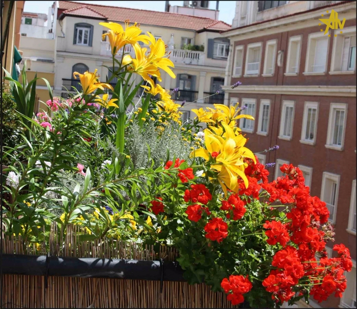 20130601_124320_1Jaime Jardinero Urbano flores de balcГіn en junio --- balcony flowers in June (700x604, 560Kb)