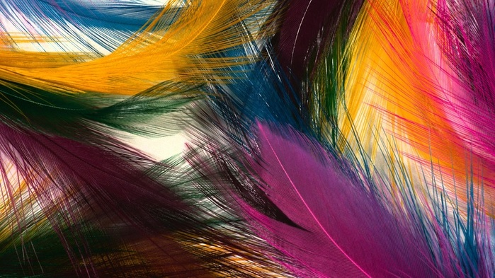 Colorful-feathers_1920x1080 (700x393, 139Kb)