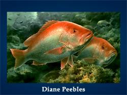 5107871_Diane_Peebles (250x188, 82Kb)
