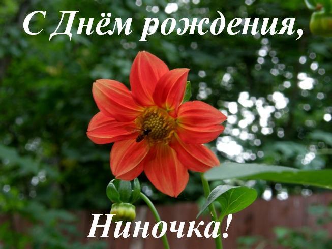 Праздником днем, поздравления с днем рождения ниночка картинки