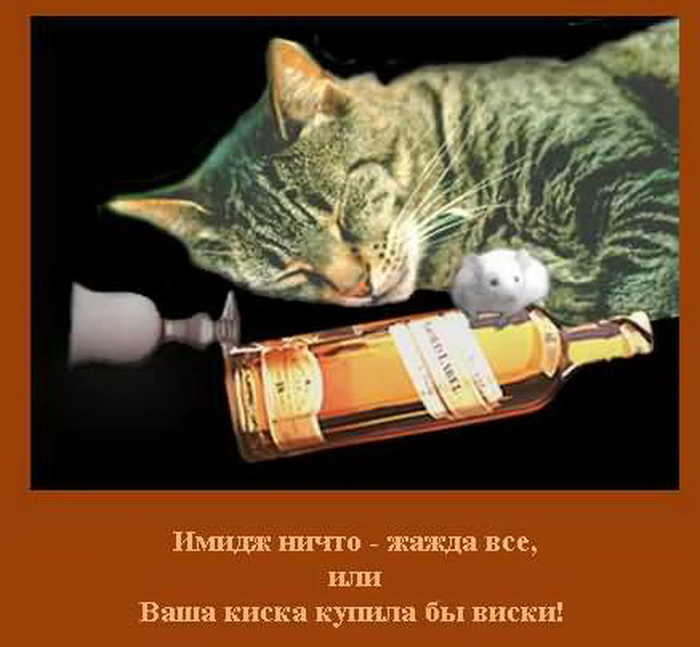 Виски бы смешные картинки