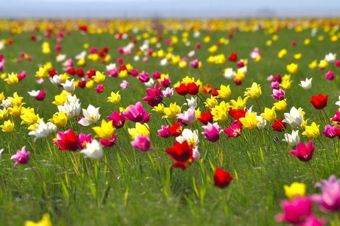 цветущая долина - Самое интересное в блогах
