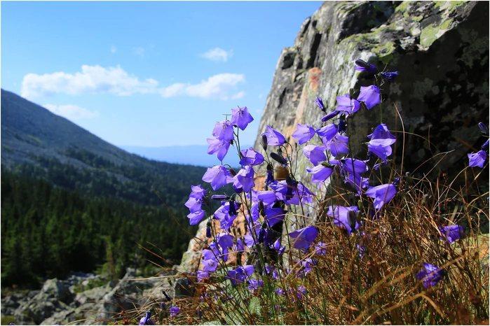 полевые цветы с белой скалы фото окрашивание удлиняет локоны