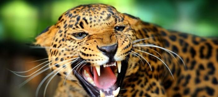 Реальные истории, как животные мстят людям, которые их обидели