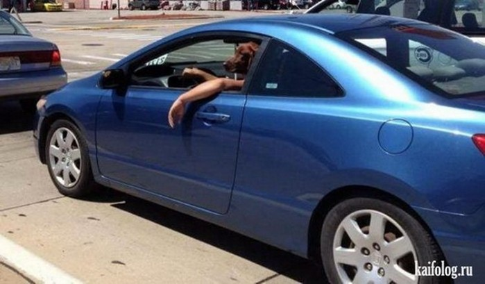 Смешные фотографии водителей: автомобильные приколы