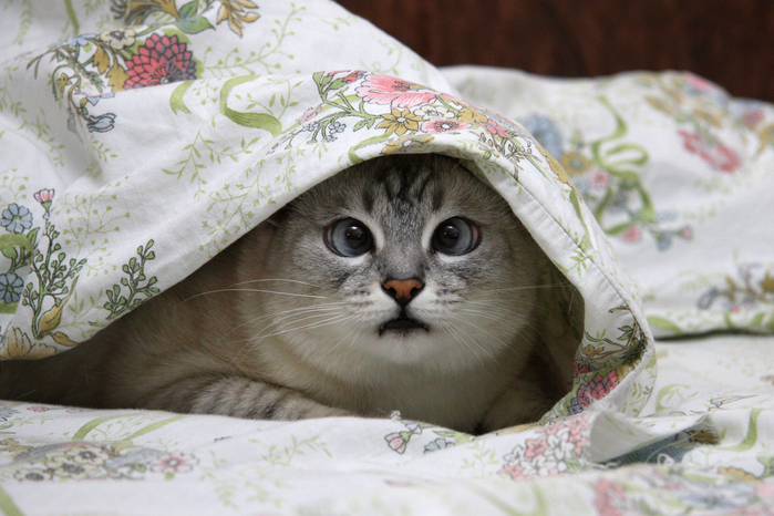 картинки с добрым утром под одеялом край мужской рубашки