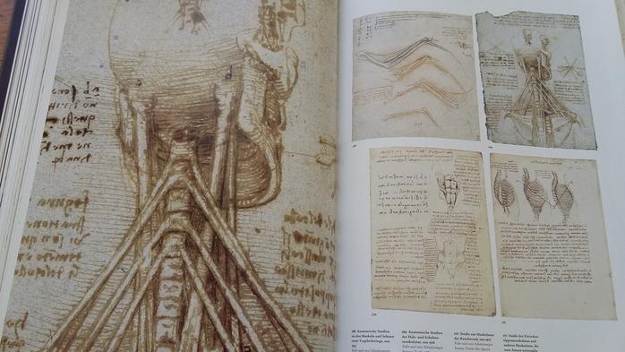 Идеи по взаимосвязи анатомии и рун - Страница 2 145561273_55