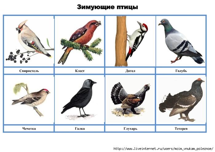 минувшем птицы дидактические картинки дорога