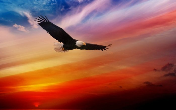 Для, картинки с надписями год парящего орла