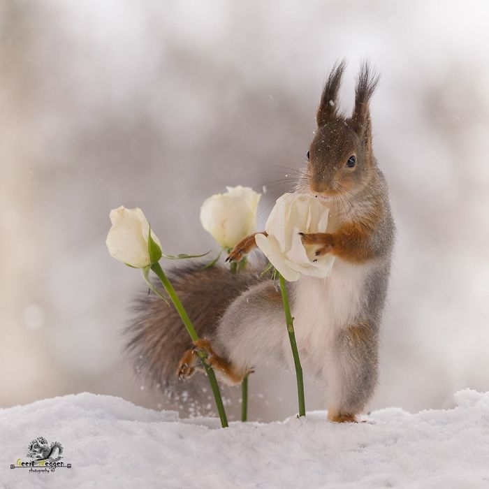 I-followed-squirrels-daily-for-6-years-with-my-camera-and-they-became-my-friends-5c063c6e3cf62__700 (700x700, 150Kb)