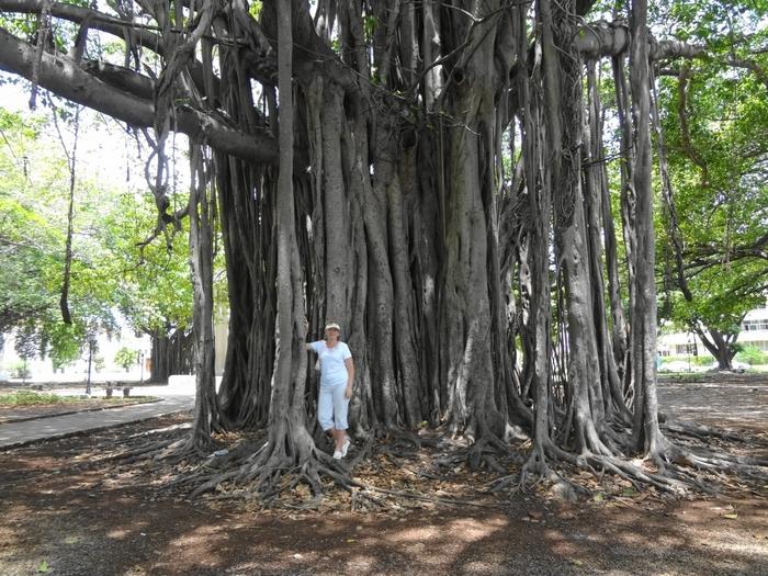 только стоят фото и названия деревьев кубы сайте