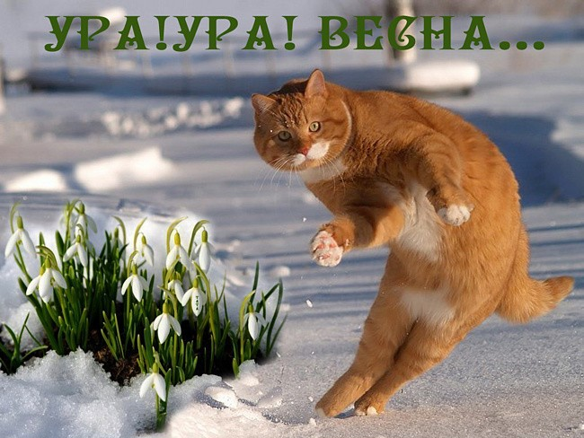 Фото поздравление смешное с весной