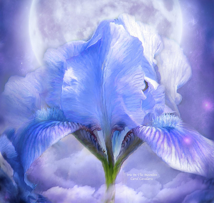 iris-goddess-in-the-moonlite-carol-cavalaris (700x663, 465Kb)