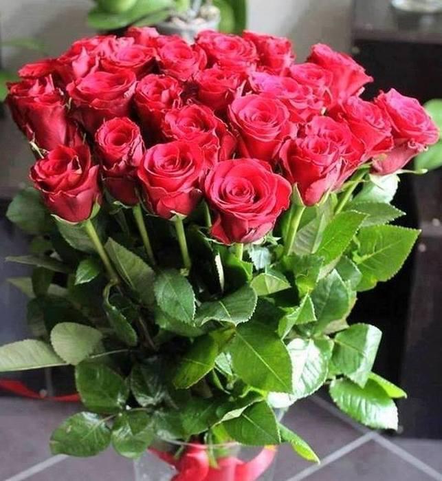 Картинки все розы мира к твоим ногам, день знаний прикольные