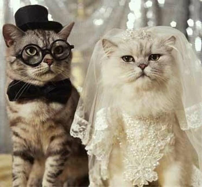предлагаем картинки с кошками о свадьбе компонент