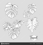 Превью depositphotos_221989558-stock-illustration-monstera-leaves-tropical-plant-vector (658x700, 219Kb)