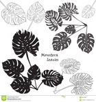 Превью silhouette-tropical-monstera-leaves-black-isolated-white-background-vector-illustration-66253387 (654x700, 279Kb)