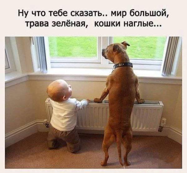 smeshnie_kartinki_153360306540 (600x558, 185Kb)