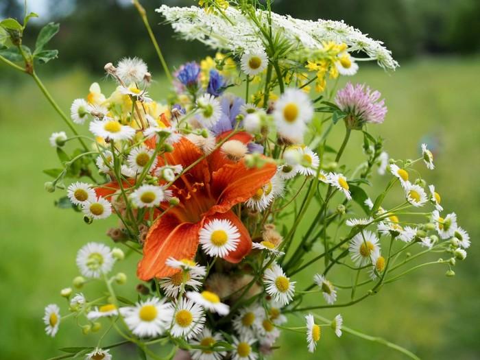 Открытка цветы летние, красиво подписать