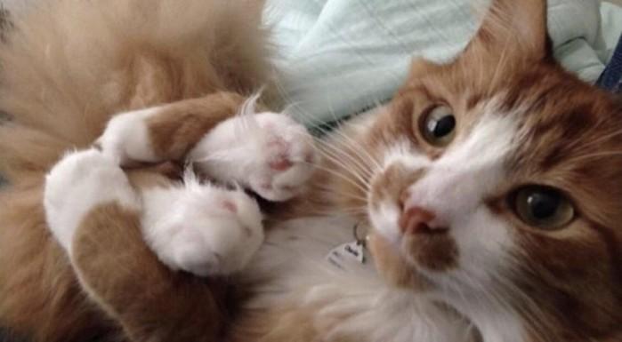 25доказательств, что животные  это «люди вшубах»
