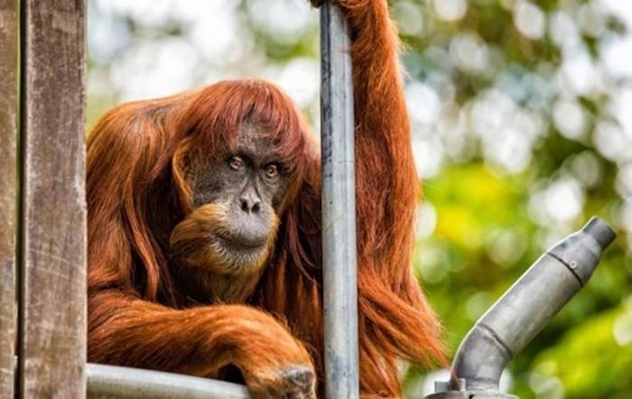 Интересные факты о животных в двух частях