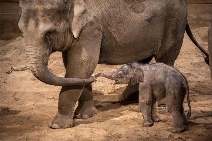 100 интересных фактов о животных
