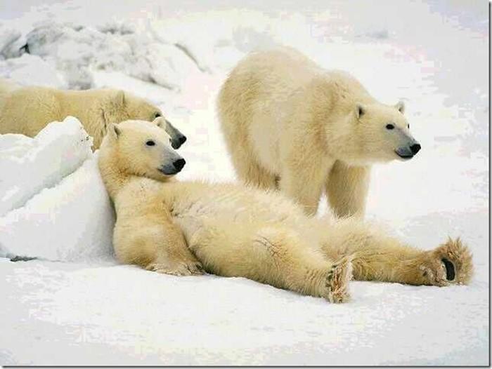 Животные: удивительные создания и наши лучшие друзья