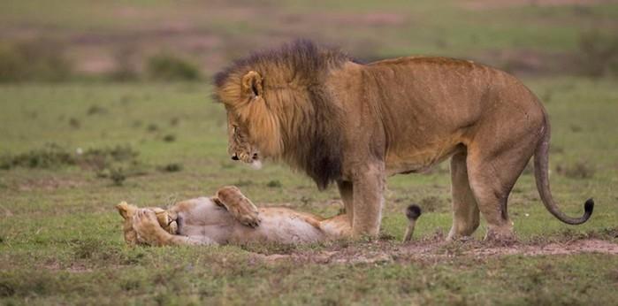 Интересные факты о животных для детей и взрослых